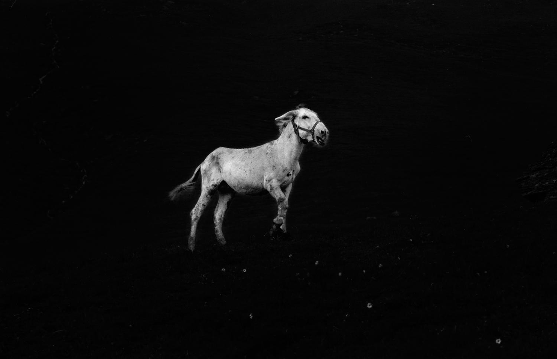 Ilaria Ferretti Donkey