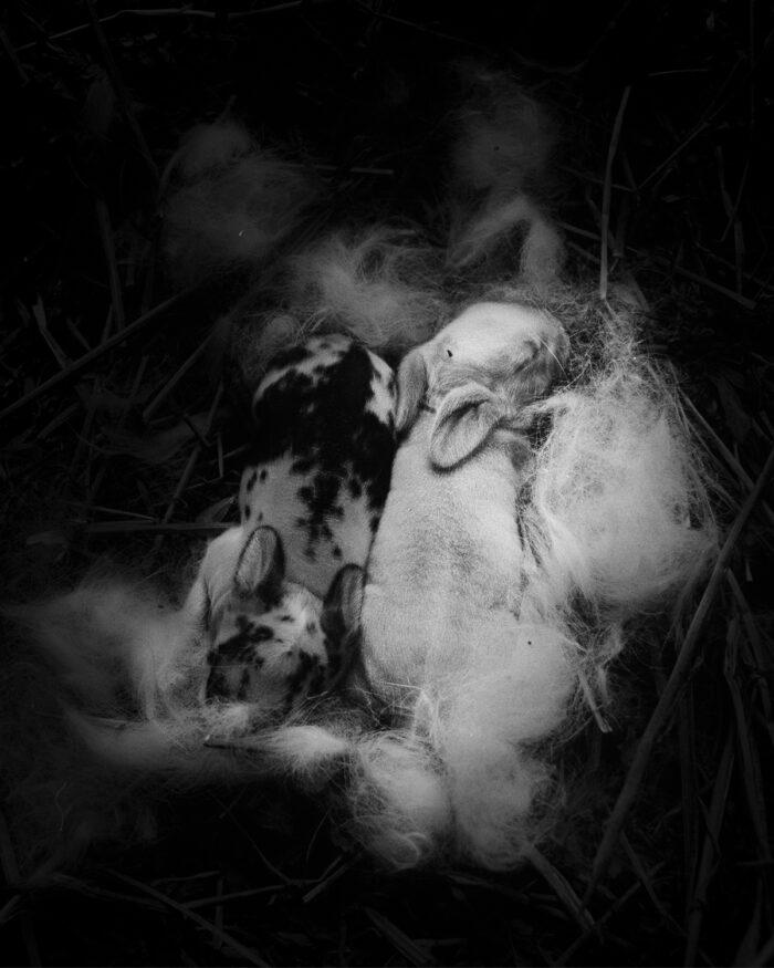 Ilaria Ferretti Newborn Rabbit