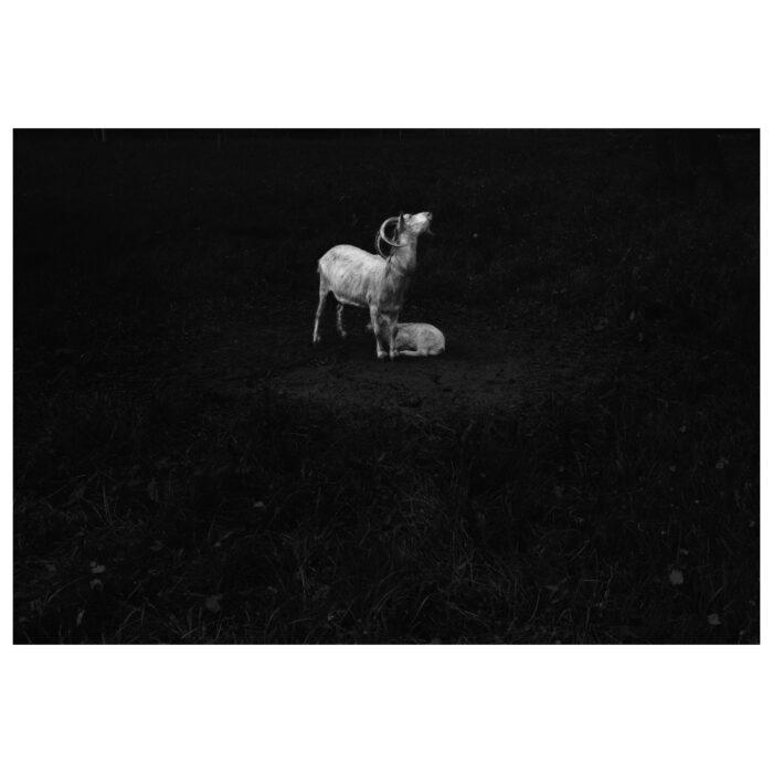 Ilaria_Ferretti_Ares_Contemporary